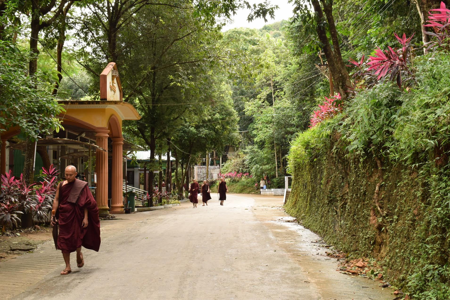 monks returning from meditation pa-auk tawya forest monastery myanmar